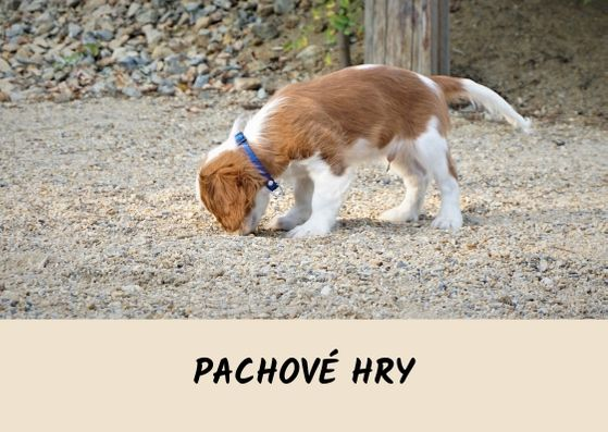 ONLINE_pachove-hry